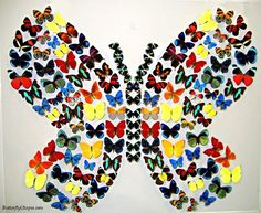 Butterfly Utopia « Emergent Creativity