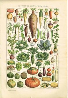 Welcome to WindsorArts We hope you enjoy looking at our items, and hopefully find something you like. We are happy to combine shipping, Original Full Colour Vintage French Larousse Print Lithograph Book Plate showing Vegetables or LEGUMES from the 1920s. The reverse side of this page has