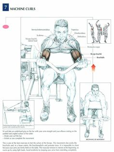 Machine Curls ♦ #health #fitness #exercises #diagrams #body #muscles #gym #bodybuilding #arms