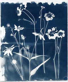 Cyanotype Experiment #1 | by Pam Lostracco