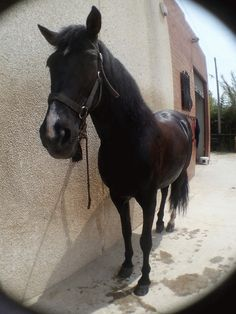 My mare Zarina, after a walk and a shower!