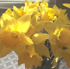 Daffodils Lifebylotte