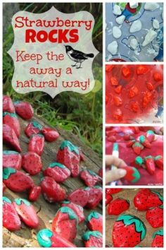 Strawberry Rocks to keep the birds out of your patch ~ DIY Friday Garden Crafts, Garden Projects, Projects To Try, Strawberry Patch, Strawberry Wedding, Strawberry Beds, Diy Patches, Spring Activities, Food Themes