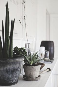 concrete indoor potted plants