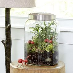 Encourage kids to use their creativity and create their own terrarium. They can pick their plants and add their own toys or items to the container.