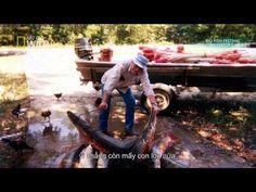 Monster Fish - Alligator Gar 1080i HDTV - YouTube