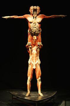 'Body Worlds' Exhibition By Gunther Von Hagens