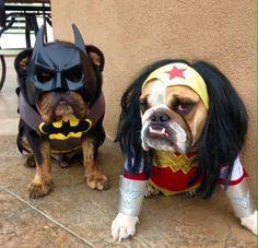 Super Bulldogs!