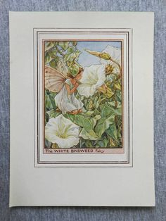 This beautifull White Bindweed Flower Fairy Vintage Print by Cicely Mary Barker was printed c.1950 and is an original book plate from and early Flower Fairy book. This is an original page (book plate) from the vintage book and not a modern copy or reproduction. This print is guaranteed