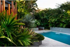 Having a pool sounds awesome especially if you are working with the best backyard pool landscaping ideas there is. How you design a proper backyard with a pool matters. Tropical Pool Landscaping, Tropical Backyard, Backyard Pool Designs, Swimming Pools Backyard, Swimming Pool Designs, Outdoor Landscaping, Tropical Decor, Bali Garden, Garden Pool