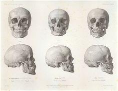Louis-Auguste Bisson, European Skulls, 1841