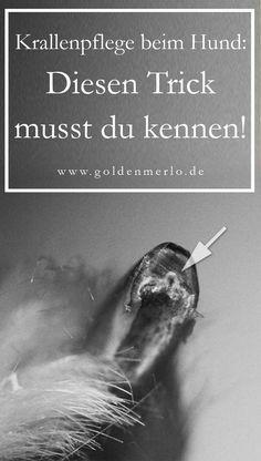 Krallen schneiden beim Hund: Mit diesem einen Trick wird das Krallen kürzen zum Kinderspiel. #hundekrallen #krallenschneiden #krallenzange #krallenkürzen #pfotenpflege www.goldenmerlo.de