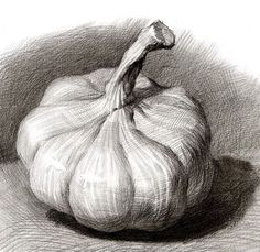 24 Garlic And Onion Pencil Drawing Ideas bleistift 24 Garlic And Onion Pencil Drawing Ideas Community wall photos – photos Pencil Sketch Drawing, Pencil Drawing Tutorials, Pencil Shading, Pencil Art Drawings, Art Drawings Sketches, Drawing Ideas, Charcoal Drawings, Realistic Drawings, Drawing Faces