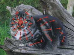 Fur Map for painting realistic cat fur.