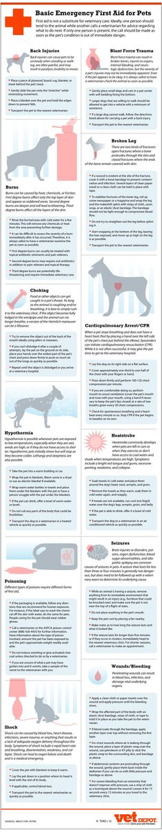 Important First Aid Tips That Every Pet Owner Should Know: http://www.survivalistalerts.com/important-first-aid-tips-that-every-pet-owner-should-know/