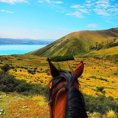 The best way to start the day and explore the island🐴💙 🏇 #goodmorning #newzealand #horseriding #horse #love #mountaincook #mountains #lake #trip #horserider #beautiful #view #loveit #travel #podróże #zwiedzamy #explore #nature #thebest #photooftheday #active #adventure #lpfanphoto #30xthirty