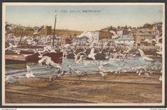 Gulls Excitement, St Ives, Cornwall, c.1930s - Dennis Aqua-Tone Postcard