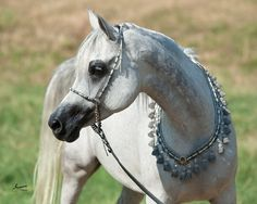 Mystique LL (Mishaal HP x Erie Anna by Thee Infidel), grey Egyptian Arabian show mare