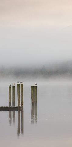 A Misty Start, Derwent Water, Lake District. ~ By Adam Burton.  Could perhaps do a similar shot to this at The Groves?