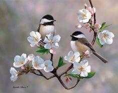 Chickadees on a sakura branch