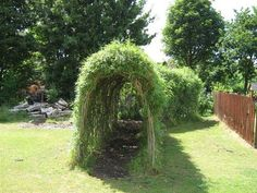 Willow forts! They grow super fast! You can start a new tree from just a small cutting. Leave it in water for a month or two to get long roots, then plant it outside! Very easy to shape.