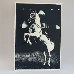 Kate Gibb Prancing Horse Screenprint: Prints are from an unlimited edition and are all screenprinted by hand. Owing to the nature of screenprinting individual variations occur during the process of making each print. Screenprints by esteemed printer and colourist Kate Gibb. All prints will be sent out rolled in a cardboard tube.