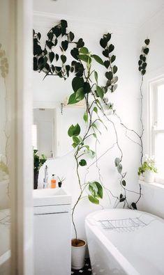 Planta Filodendro na decoração do banheiro