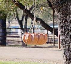 Pumpkin Bird Feeder! Perfect for fall :)