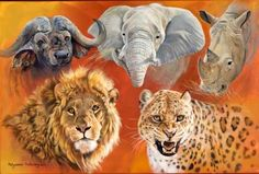 Africa's big 5 - The water buffalo, the elephant, the white rhino, lion and leopard.