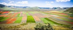 La piana di Castelluccio in fiore #castelluccio #norcia #fioritura #fotografia #umbria
