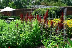 Trellis for cucumbers and beans