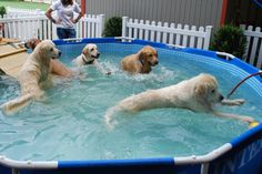 Our new dog pool has been a big hit with the dogs here at TDK. (Members, be sure to check the calendar for future pool parties! Dog Swimming Pools, Dog Pools, Swimming Tips, Dog Pool Ramp, Backyard Pool Landscaping, Cute Dog Photos, Beautiful Dogs, Large Dogs, Dog Life