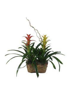 Bromeliad plant basket