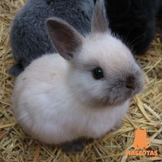 Cute Animals Easy To Draw Cute Animals Of Australia Baby Animals Super Cute, Cute Baby Bunnies, Cute Little Animals, Cute Funny Animals, Cute Cats, Cute Bunny Pictures, Baby Animals Pictures, Cute Animal Pictures, Tier Fotos