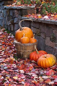 Citrouille - Autumnal pumpkin display with leaves against a rock wall. Autumn Day, Autumn Leaves, Autumn Nature, Red Leaves, Hello Autumn, Autumn Garden, Autumn Scenes, Fall Harvest, Autumn Inspiration