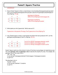 Free Printable Worksheets For High School Inheritance Activities Genetics Terminology And Punnett Squares  Decimal Comparison Worksheet Excel with Number And Operations In Base Ten Worksheets Pdf Punnettsquarepracticeanswerkeydocx Free Math Worksheets Online Word
