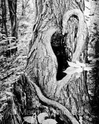 tree photography - Google Search