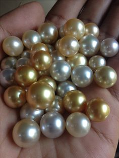 Cultured pearls; beautiful gold and cream south sea pearls.
