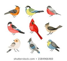 Find Winter Birds Flat Vector Illustrations Set stock images in HD and millions of other royalty-free stock photos, illustrations and vectors in the Shutterstock collection. Thousands of new, high-quality pictures added every day. Vogel Illustration, Red Robin Bird, All Animals Images, Bird Graphic, Animal Body Parts, Bullfinch, Bird Drawings, Wild Birds, Free Vector Art