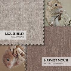 Ones To Swatch | The best inspiration always comes from nature. Mouse Belly (Tweedy Weave) and Harvest Mouse (House Cotton Linen) are warm neutrals that are as soft as their names suggest. #theloungeco #fabric #sofa #swatch #swatches #neutral #brown #harvest #autumn #mouse #cute #moodboard #interiorinspiration Harvest Mouse, Fabric Sofa, Cotton Linen, Earthy, Interior Inspiration, Swatch, Weave, Neutral, Fabrics