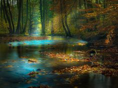 Perfect weather this mornig for a small photo tour throug the Spessart Mountains, Germany.  Found this little creek in a valley and had a lot of fun for some hours to caputre some pic like this one:-)  Hope, you'll like it!
