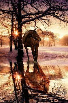 Horse in golden glow sunrise. Amazing horse photography on misty morning.