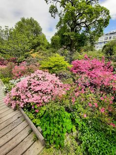 Sidewalk, Plants, Side Walkway, Walkway, Plant, Walkways, Planets, Pavement