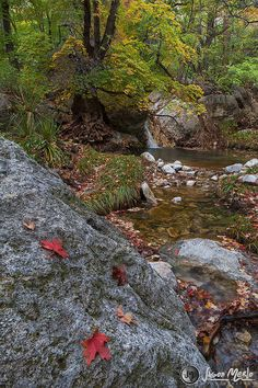 Fallen maple leaves and waterfall, Guadalupe Mountains National Park - Culberson County, Texas