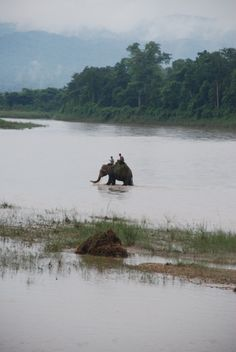 Elefantes al amanecer (Sur de Nepal)