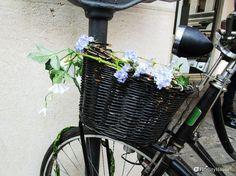Ne trovi appoggiate ai muri, legate ai paletti delle segnaletiche, ai porta biciclette.