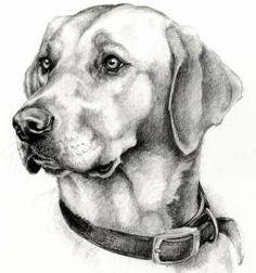 : Jo McGrath Animal Portraits and Prints Dog Portraits Commissions Horse Portrait Commisions Realistic Animal Drawings, Pencil Drawings Of Animals, Cool Art Drawings, Animal Sketches, Art Drawings Sketches, Drawings Of Dogs, Horse Portrait, Dog Portraits, Deer Sketch
