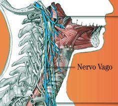 Nervo vago: disturbi e relativi rimedi