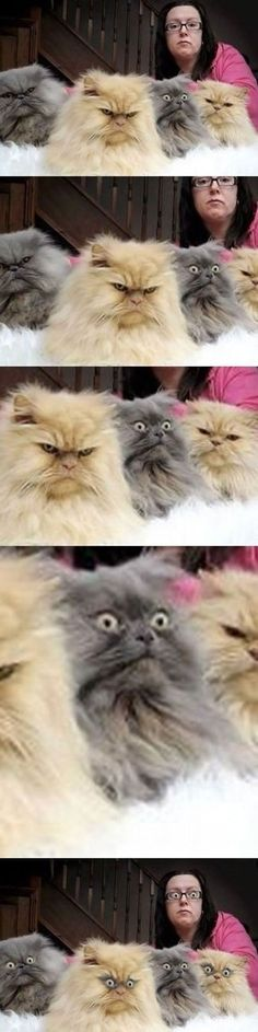 Surprised Cat Is Surprised