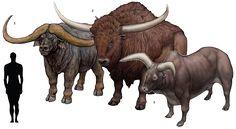 "Prehistoric taxonomie | Pelorovis howelli (""monstrous sheep"") 1925 ..."